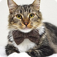 Adopt A Pet :: King - Dublin, CA