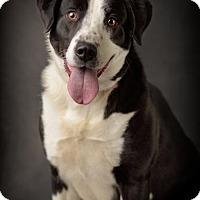Adopt A Pet :: Asia - Salt Lake City, UT
