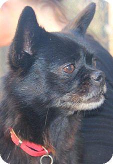 Pekingese/Chihuahua Mix Dog for adoption in McDonough, Georgia - Petunia