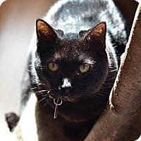 Adopt A Pet :: L.B. 12039 - Atlanta, GA