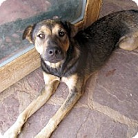 Adopt A Pet :: Jessa - Santa Fe, NM