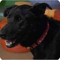 Adopt A Pet :: Chispa - San Francisco, CA