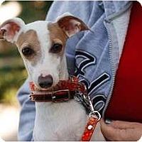 Adopt A Pet :: Benito - OC - San Diego, CA