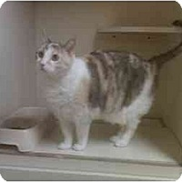Adopt A Pet :: Callie - Bartlett, TN
