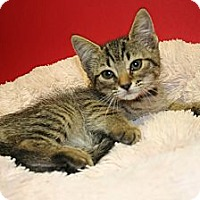 Adopt A Pet :: BIANCA - SILVER SPRING, MD