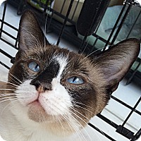 Adopt A Pet :: Natasha - Winchester, CA
