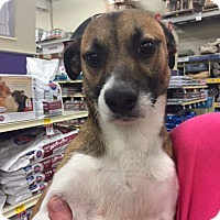 Terrier (Unknown Type, Medium) Mix Dog for adoption in Fresno, California - Ethan
