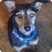 Adopt A Pet :: Mya - Carey, OH