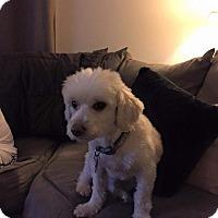 Adopt A Pet :: Fletcher - Schofield, WI