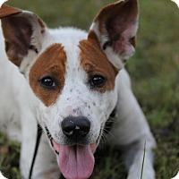 Adopt A Pet :: JJ - Marion, AR