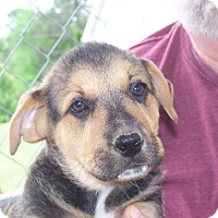 Adopt A Pet :: Blue - Hohenwald, TN