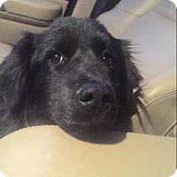Adopt A Pet :: Raven - Harmony, Glocester, RI