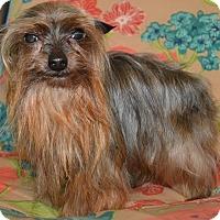 Adopt A Pet :: Elijah - Prole, IA