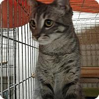 Adopt A Pet :: Carly - Ortonville, MI