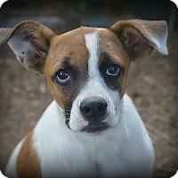 Adopt A Pet :: CiCi Rider - Glastonbury, CT
