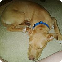 Adopt A Pet :: Dakota - Villa Park, IL
