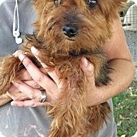 Adopt A Pet :: Wharf - Washburn, MO