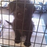 Adopt A Pet :: Mikki - Waller, TX