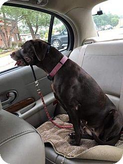 Labrador Retriever Mix Dog for adoption in Lexington, North Carolina - Lexi