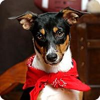 Adopt A Pet :: Winston - Lincoln, NE