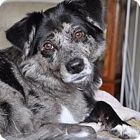 Adopt A Pet :: Ashes - West Palm Beach, FL