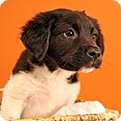 Adopt A Pet :: Fluffies Ben
