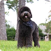 Adopt A Pet :: VADER - Melbourne, FL