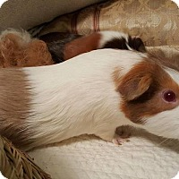 Adopt A Pet :: Ruby and Tiara - Aurora, IL