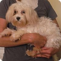 Adopt A Pet :: Mia - Venice, FL