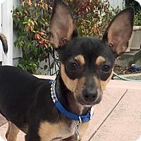 Adopt A Pet :: Oliver - Pacific Grove, CA