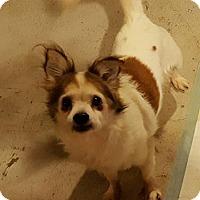 Adopt A Pet :: Toby - Bernardston, MA