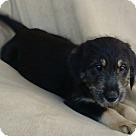 Adopt A Pet :: Morgan pending adoption
