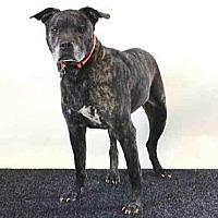 Adopt A Pet :: TY - Sanford, FL