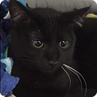 Adopt A Pet :: Whiskers - Divide, CO