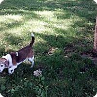 Adopt A Pet :: Birdie - Indianapolis, IN