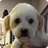 Adopt A Pet :: Hubble - no shed! - Phoenix, AZ