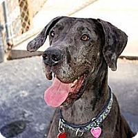 Adopt A Pet :: Bella #2 - Pearl River, NY