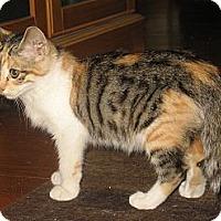 Adopt A Pet :: Lovie - Acme, PA