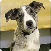 Adopt A Pet :: Dylan - Mocksville, NC