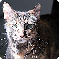 Adopt A Pet :: Frannie Faygo - Chicago, IL