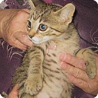Adopt A Pet :: Strawberry - Dallas, TX