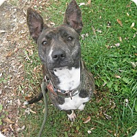 Adopt A Pet :: #458-14 ADOPTED! - Zanesville, OH