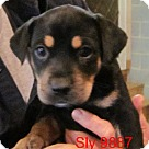 Adopt A Pet :: Sly