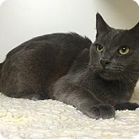Adopt A Pet :: Dorian - Mission Viejo, CA