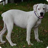 Adopt A Pet :: Laverne - Charlemont, MA