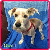 Adopt A Pet :: Owen - Hollywood, FL