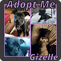 Adopt A Pet :: Gizelle - Cheney, KS