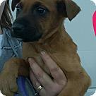 Adopt A Pet :: Dindi