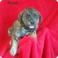 Adopt A Pet :: Rosie - Chester, IL