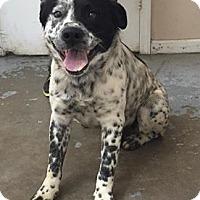 Adopt A Pet :: 4427 - Calhoun, GA